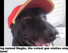 #VIRAL - Dog gets work at gas station after being abandoned