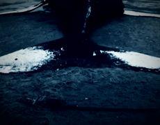#DROSS - El juego de la ballena asyl