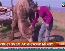 #VIDEO - Man is attacked by his camel