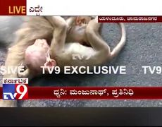 #Heartbreaking - Baby monkey cries disconsolately for the death of his mother