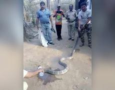 ViralVideo - Cobra Drinks Water From Bottle