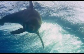 Disneynature's Dolphins Official Trailer #1 (2017)