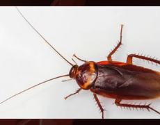 Cockroaches looking to live on the PlayStation 4