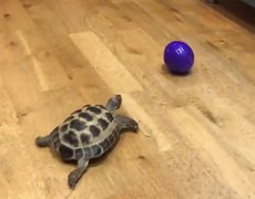 This tortoise thinks he's a dog