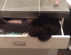 Cat Gets Stuck in Drawer