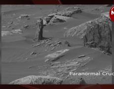 find a tree on Mars