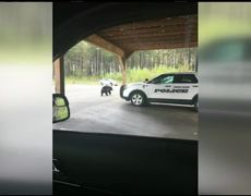Mama bear had no fear of the law