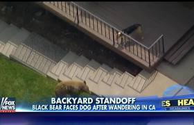Family dog faces off with wandering black bear