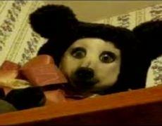 0235 El Origen Del Oso Perro