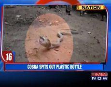 Cobra Spits Swallowed Plastic Bottle In Goa | Caught On Camera