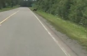 Bear Charges Car in Alaska