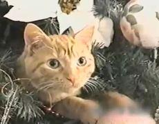 Gatos Navideños Recopilación