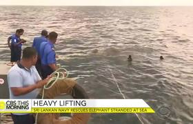 Dramatic rescue of elephant swept out to sea