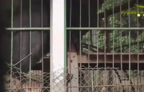 Man is brutally attacked by a bear at Thailand Zoo