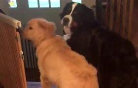 Dogs Excited to Ride the Doggie School Bus