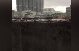 #VIDEO: March of cockroaches during hurricane in China