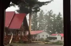 #VIDEO - Lightning strike hits tree