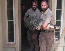 Houston Man Comes Back To Flood-Hit Home, Finds 9-Foot Alligator Inside