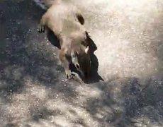 OMG - Squirrel Attacks Man