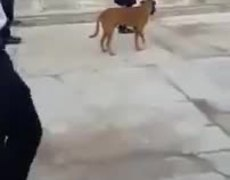 #VIDEO: THIS DOG LIKES MARCH