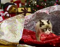 Grumpy Cat Stars in Hard To Be a Cat at Christmas Music Video