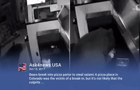 Bears Break into Colorado Pizzeria for a Slice