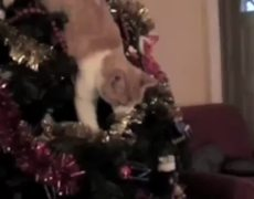 Cats Compilation In Christmas Trees