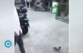 #Karma: Young man tried to kick a pigeon and ended up on the floor