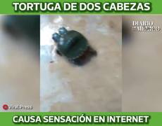 Two-headed turtle steals the hearts of Internet users