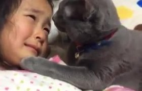 #VIRAL: Cat Trying To Comfort A Crying Girl