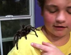 #VIRAL: Tarantula Climbs on 12 Y O Girl