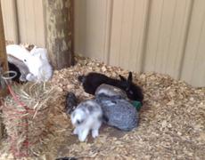 Z57 presents Bunny Pit