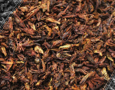 Crickets Are More Nutritious Than Chicken or Meat
