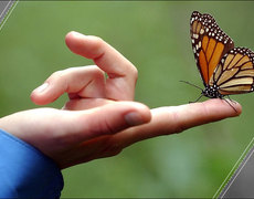 Climate Change Is Destroying Butterflies