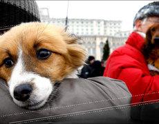 Like Owner, Like Dog