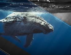 The 'Blue Whale' Challenge Devastates Latin America