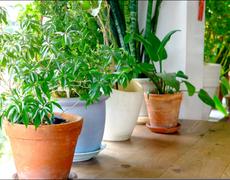 4 Ways Indoor Plants Improve Your Health