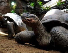 The Giant Turtles of the Galapagos Islands