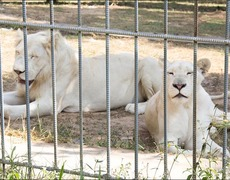 Animals Are Suffering in Zoo Due to Heatwave