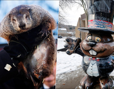 It's Groundhog Day! What Does Phil Say?