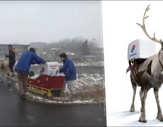 Part-time Reindeer, Part-time Pizza Deliverer!