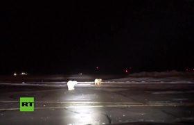 Polar bears stroll by airport runway in Alaska