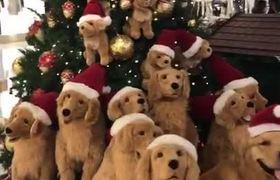 Christmas Tree Full of Doggos
