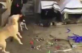 Perritos festejan Navidad con piñata llena de croquetas