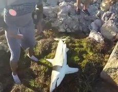 #VIRAL: Shark attacks his fisherman