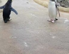 Penguin creates controversy by these steps