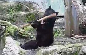 #VIRAL: Bear performs Kung Fu tricks