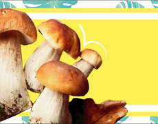 Here's how to pick wild mushrooms without ending up poisoned