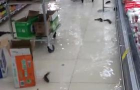 Peces nadando en el Piso del Supermercado