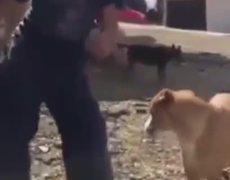 #VIRAL: Dog dances Scooby Do Pa Pa